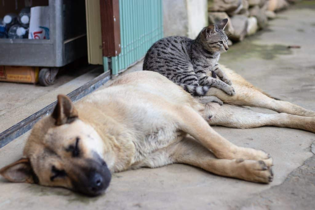 cat sitting on dog, both relaxed