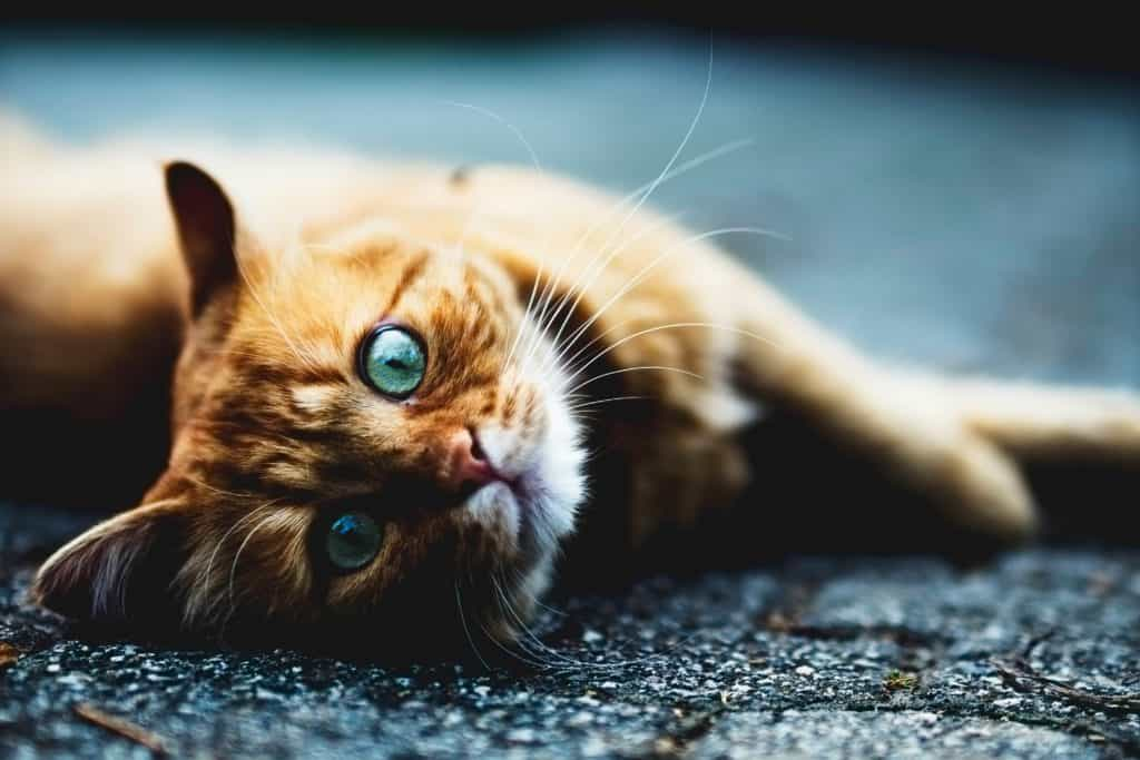 cat laying on its side, wide-eyed