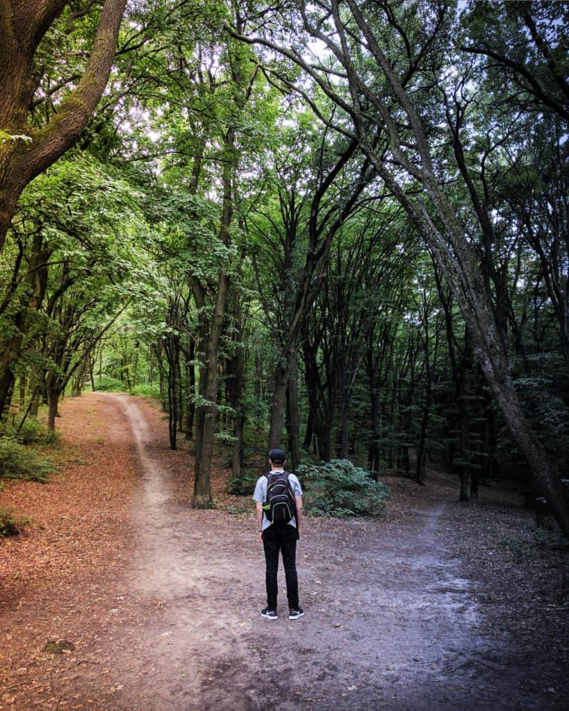 person in forest, with two paths in front of them.  The right-hand one is shaded and gloomy, the left lighter and strighter