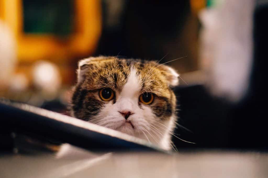 cat looking unhappy