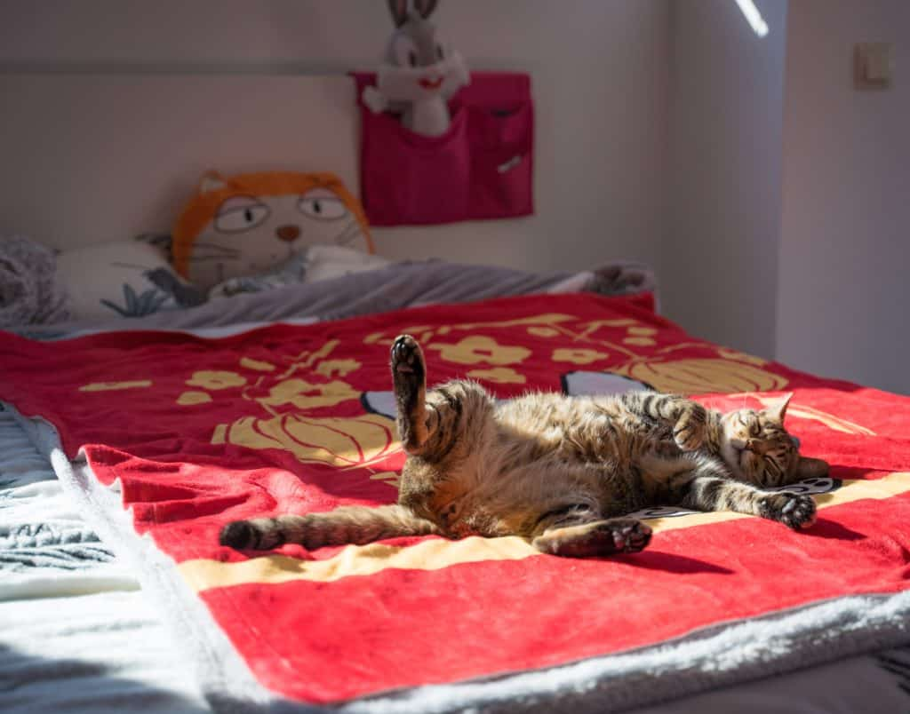 cat sprawled on its back on a bed, strangely positioned