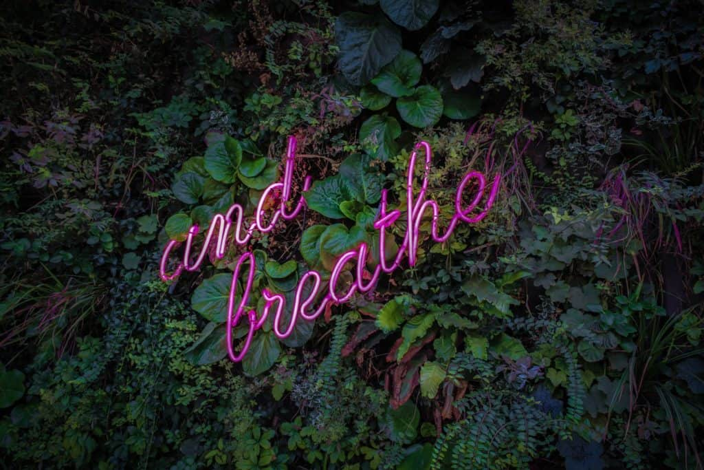 "forest background, a neon sign reads ""and breathe"""