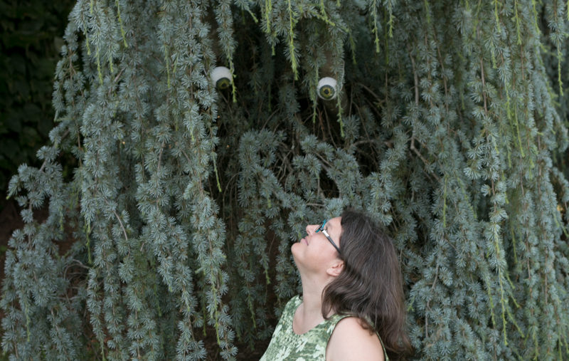 Alison looks up into a spruce tree, which has googly eyes placed in it to imply that the tree is an animal.