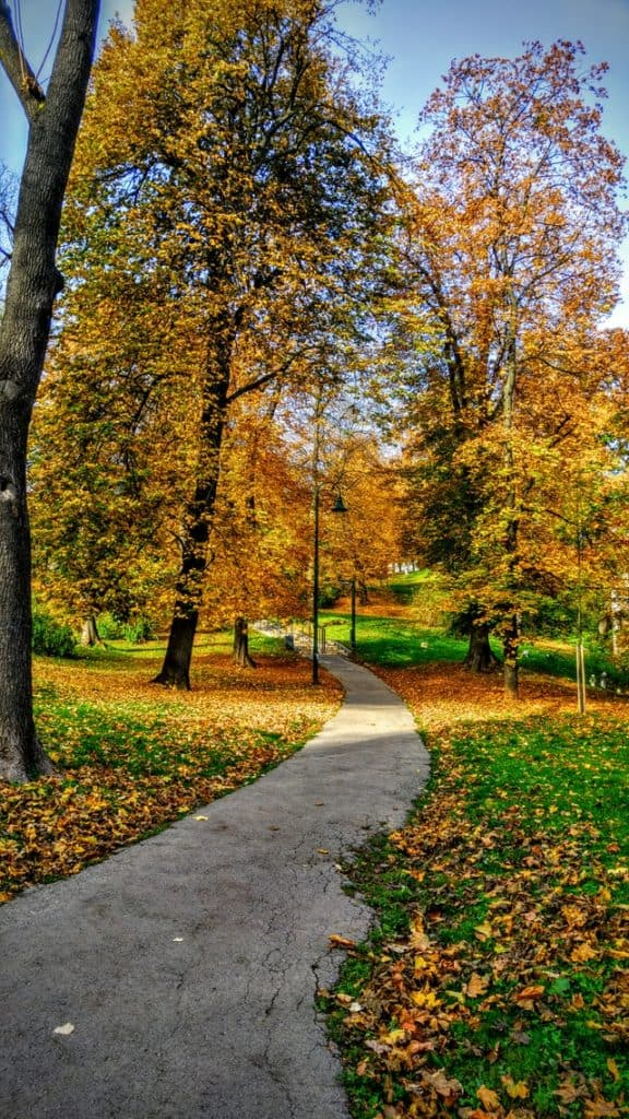 a concrete path through a park in the fall.  The trees have yellow leaves, many of which are scattered over the grass