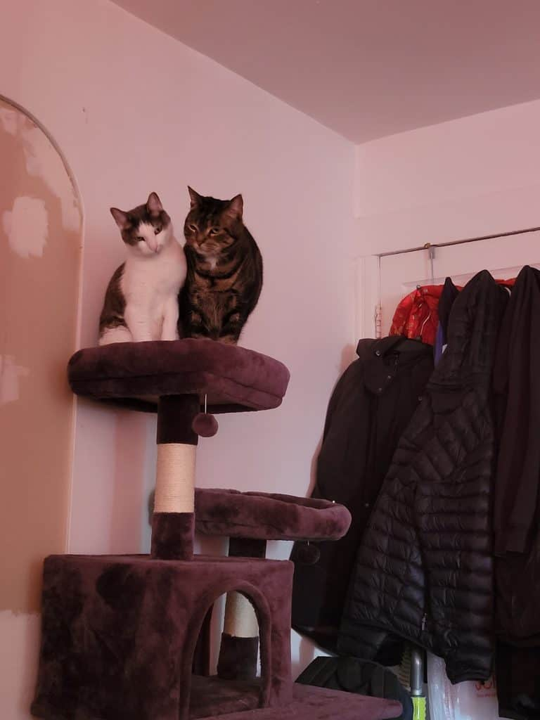 Rorschach(gray and white) and Nigel(brown tabby) sit next to one another on the top perch of a gray cat tree. It's a bit tight, and Rorschach is leaning his head away from Nigel